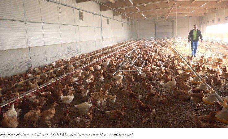 Bio Hühnerstall