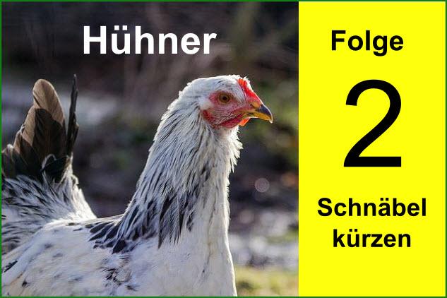 huhn2
