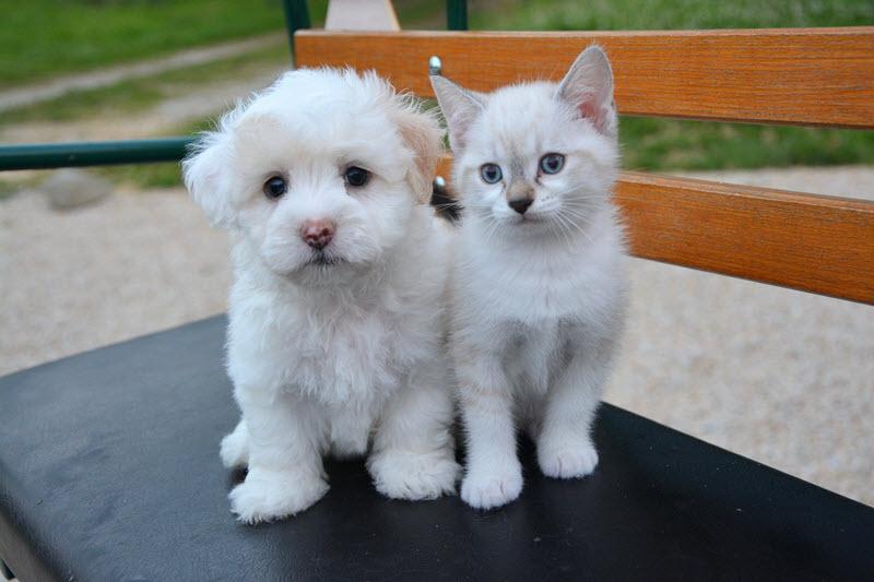 Analdruesen erfolgreich behandeln beim Hund, Katze